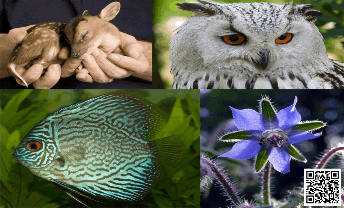 Flora, Fauna and EMFs